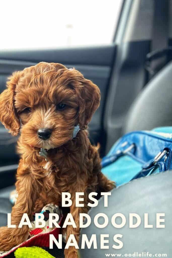 best labradoodles names