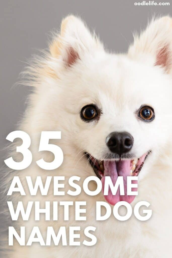 list of the best white dog names