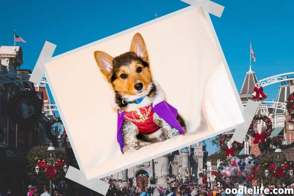 fancy dog looks regal at disneyland