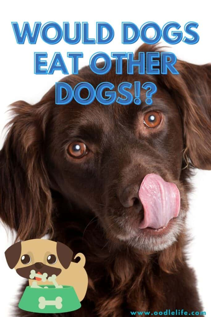 do dogs eat other dogs