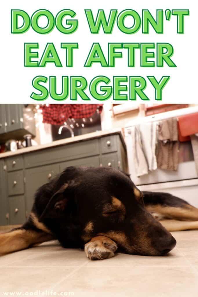 dog won't eat after surgery
