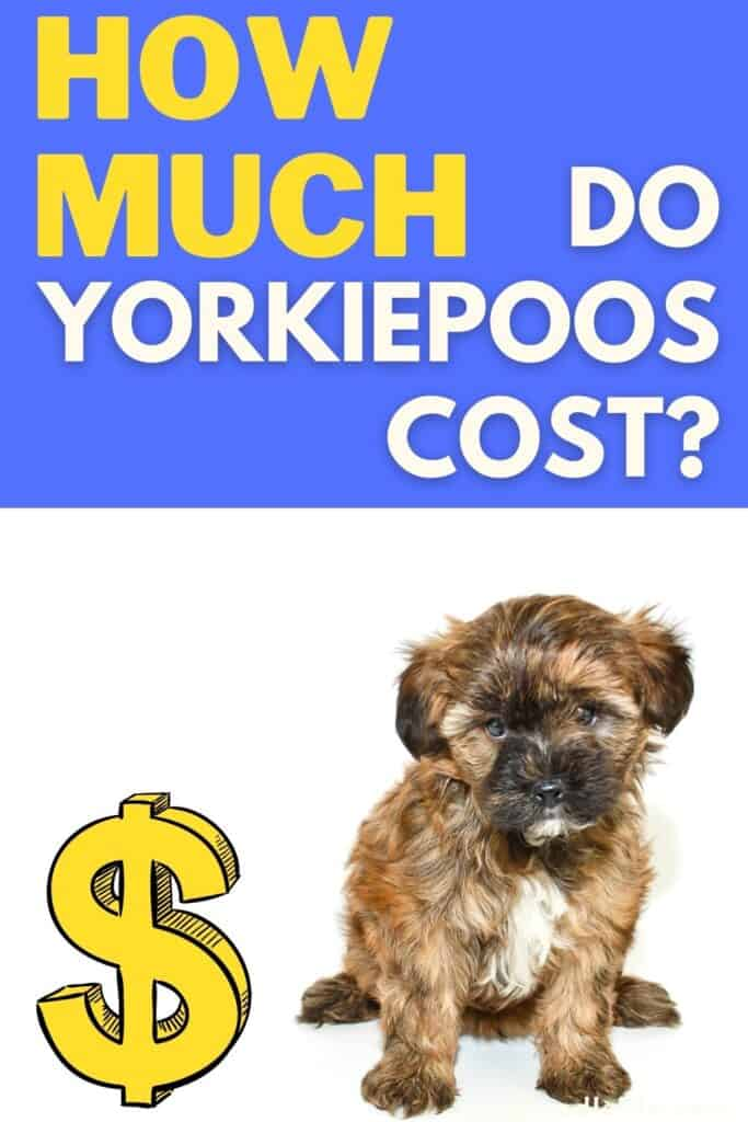 how much do yorkiepoos cost