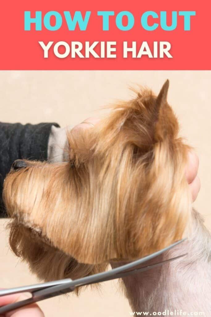 how to cut yorkie hair