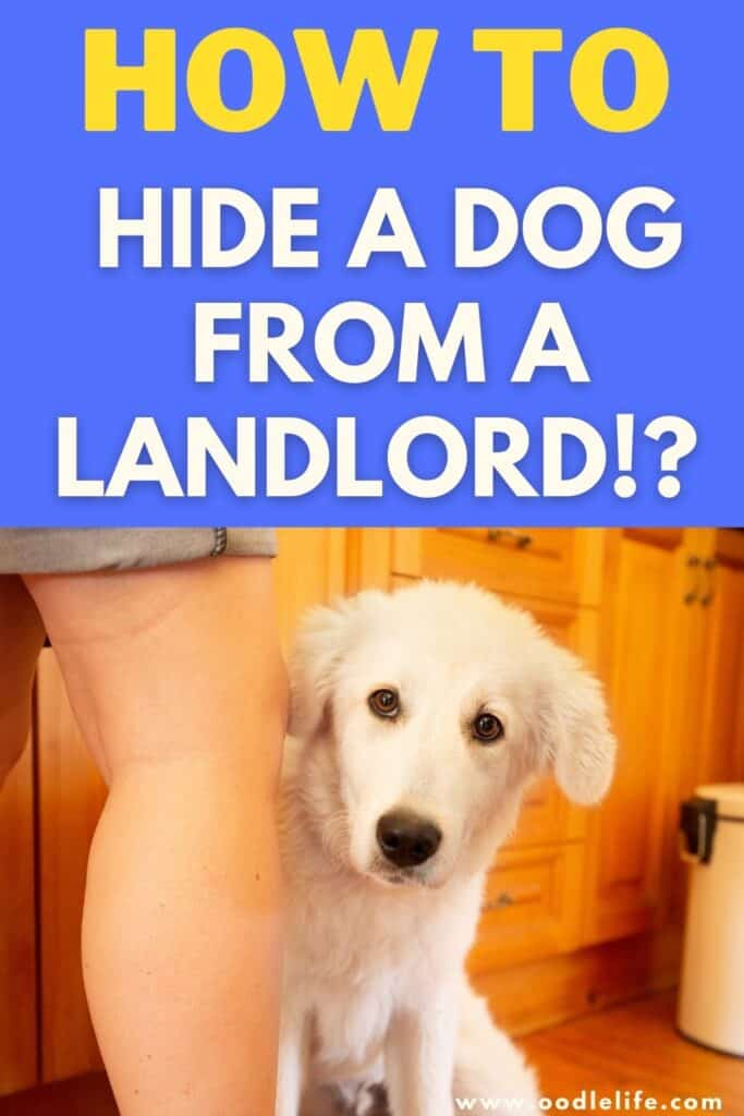 how to hide a pet from a landlord