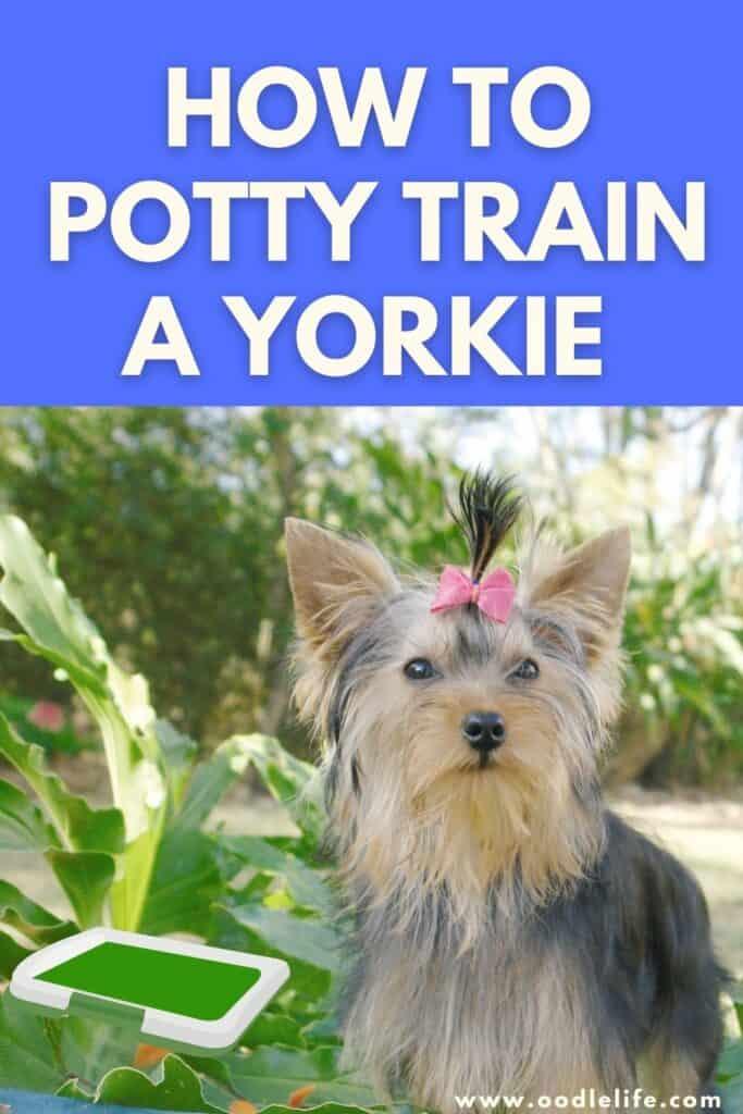how to potty train a yorkie