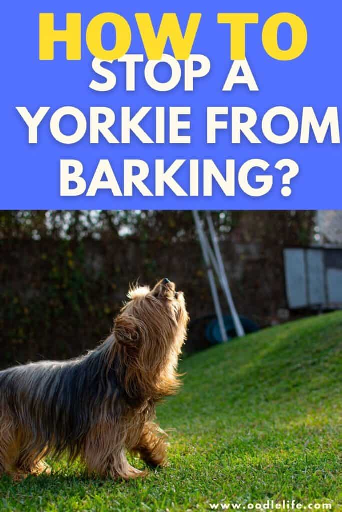 how to stop a yorkie from barking