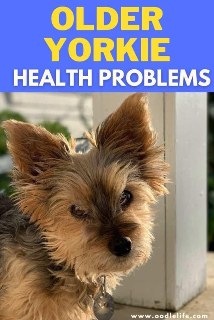 older yorkie health problems