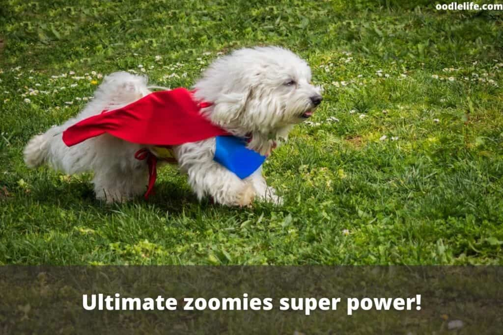 dogs super power is zoomies