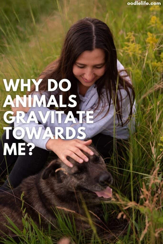 why do animals gravitate towards me
