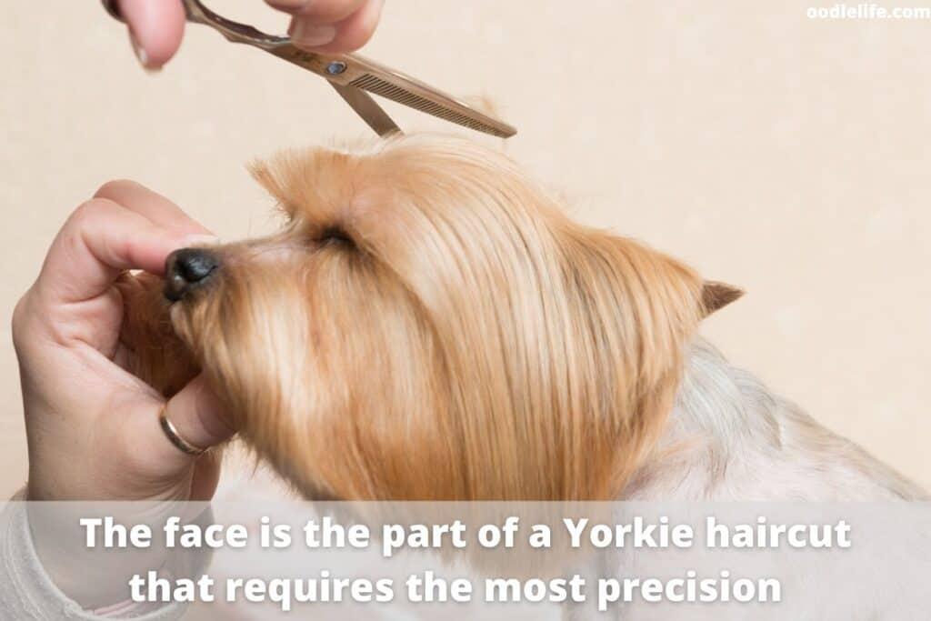 cutting yorkie hair