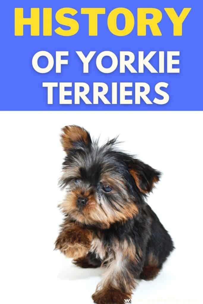 yorkie terrier history